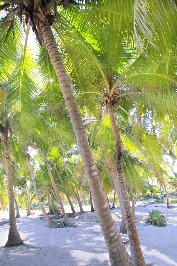 Download Coconut Palm Trees White Sand Tropical Paradise Stock Image - Image: 18505923