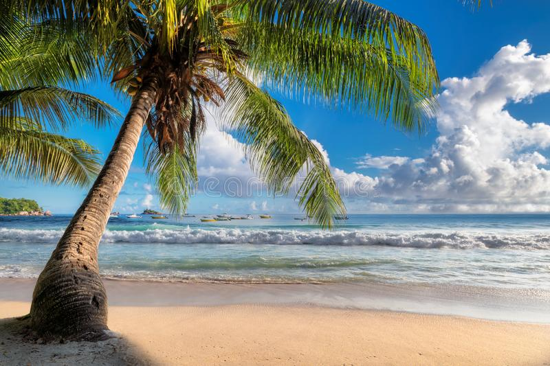 Coconut palm on tropical beach in paradise island royalty free stock photography
