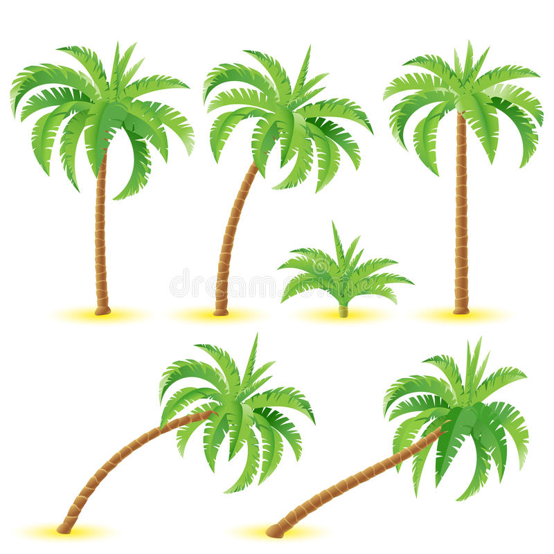 Download Coconut Palms Royalty Free Stock Photos - Image: 24247058