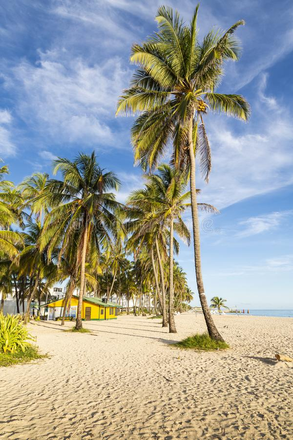 Coconut palms in a caribbean beach royalty free stock photo