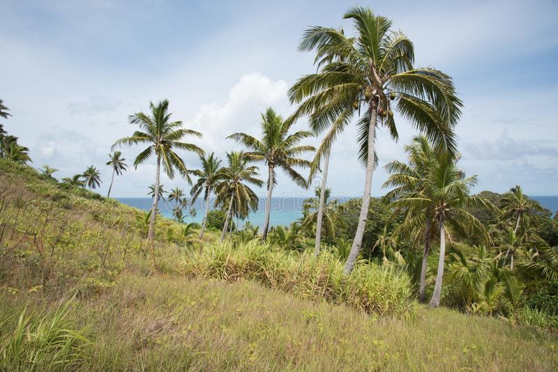 Coconut Palms and Ocean View stock photo