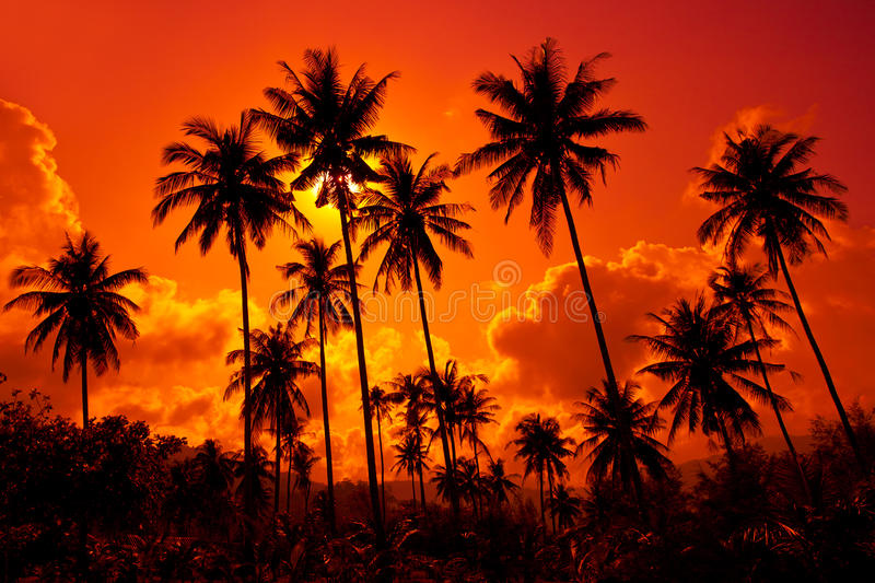 Coconut palms on sand beach in tropic on sunset stock photo