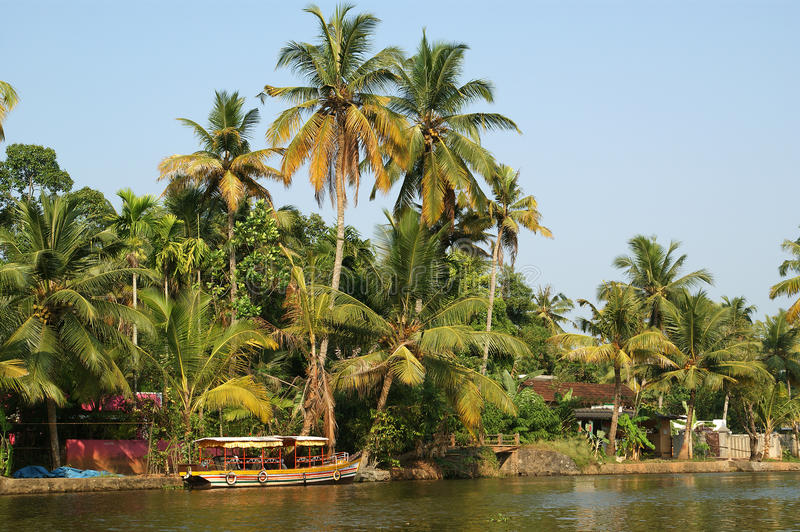 Download Coconut Palms On The Shore Of The Lake. Kerala Stock Photo - Image: 19675824