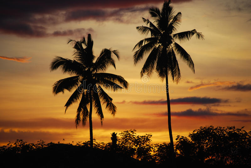 Coconut palms sunset Mindanao Philippines stock photos