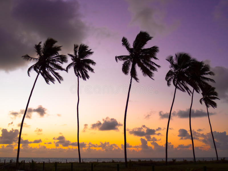 Coconut palms in the sunset royalty free stock photos