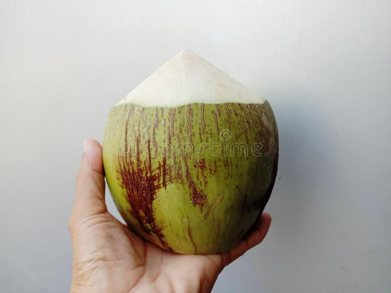 Coconut is a perennial plant. In the family, the coconut palm is a plant that can be used in many ways, such as water and young co stock images