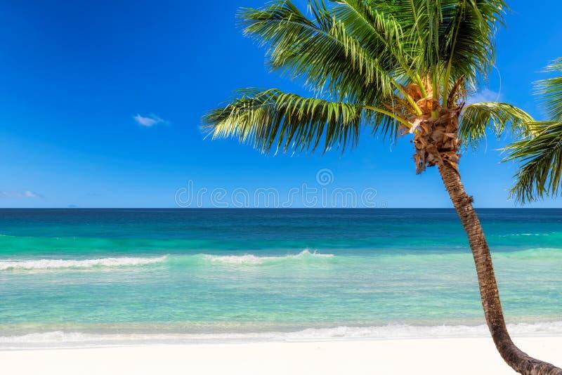 coconut plażowy palma tropical obrazy royalty free
