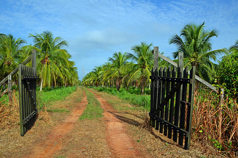 Download Coconut plantation stock image. Image of forest, holiday - 23171621