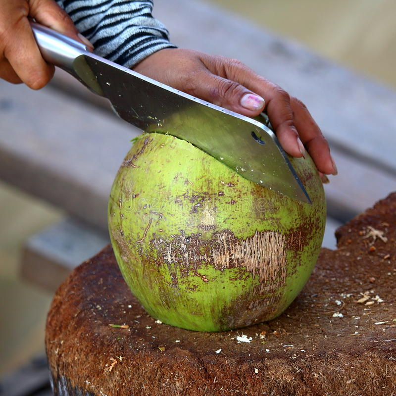 Coconut preparation: cutting. A man cutting a fresh coconut stock images