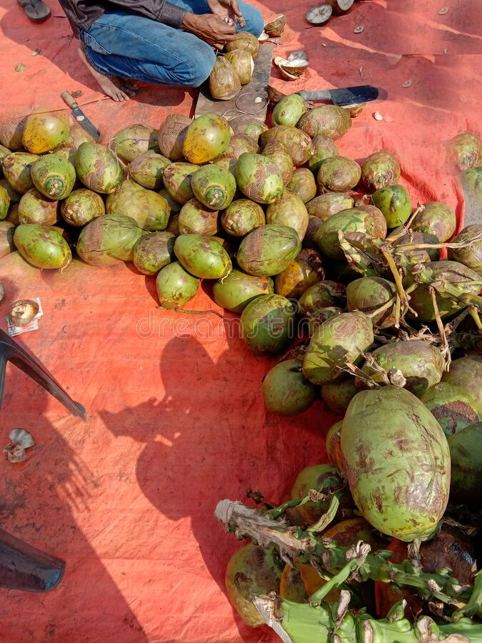 Coconut raw and ripe roadside stall in india.  royalty free stock images