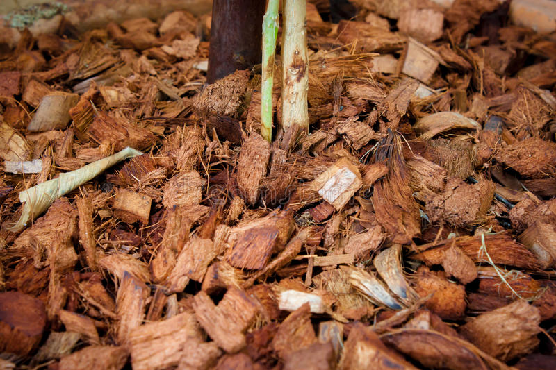 Coconut residue. With a growing plant royalty free stock images