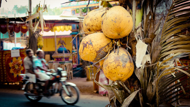 Coconut and road with bike in India. Indian Street Kerala stock images