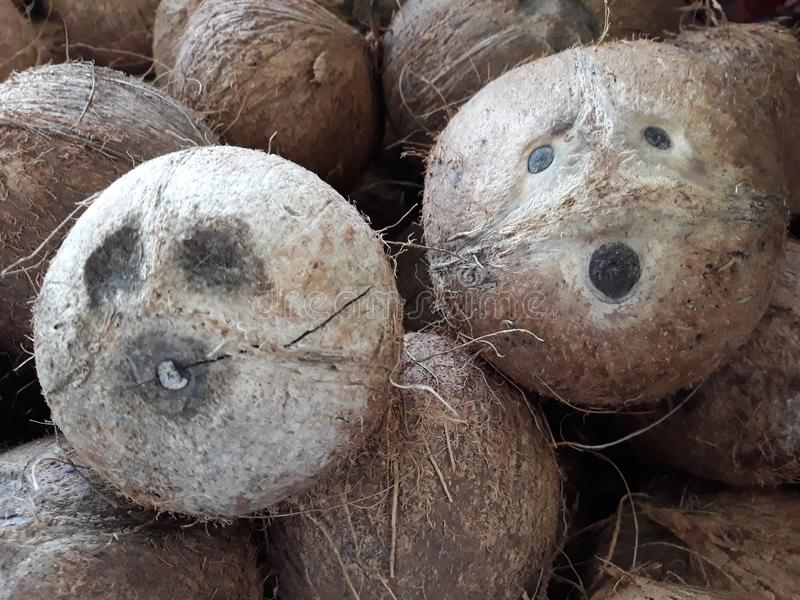 coconut with scared face royalty free stock photos