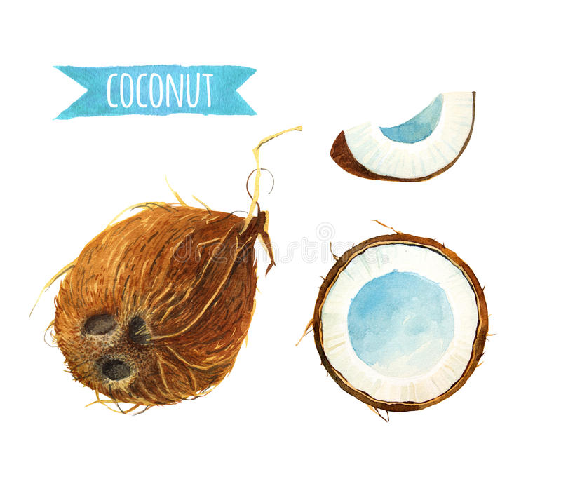 Coconut set, watercolor illustration with clipping path. Coconut hand-painted watercolor illustration clipping paths included vector illustration