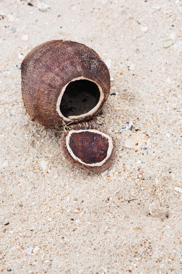 Coconut shell on the beach royalty free stock images