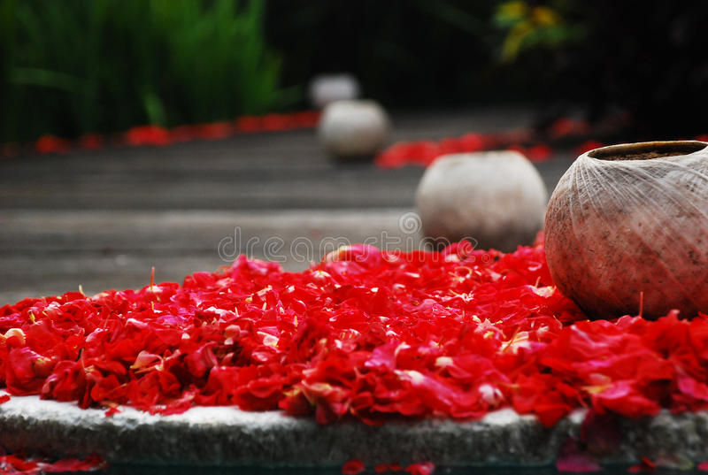 Coconut Shell on Scattered Flowers.. stock photography