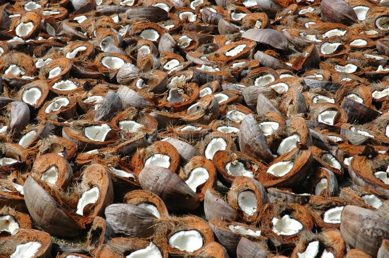 Coconut Shells Royalty Free Stock Image