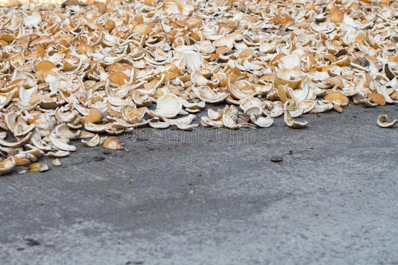 Coconut shells on grey asphalt. Coco copra dry. Tropical fruit cooking ingredient. royalty free stock image