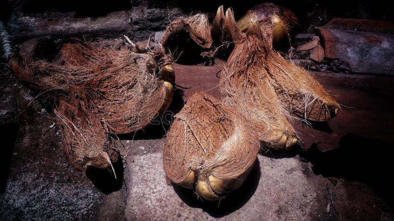 Coconut skin kertosari temanggung stock images