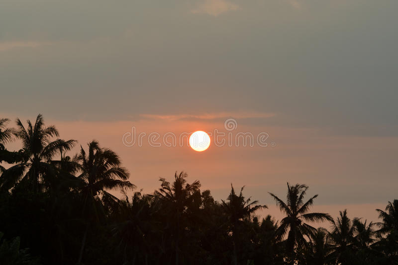 Coconut Sunset royalty free stock photo