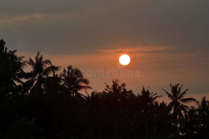 Coconut Sunset royalty free stock photos