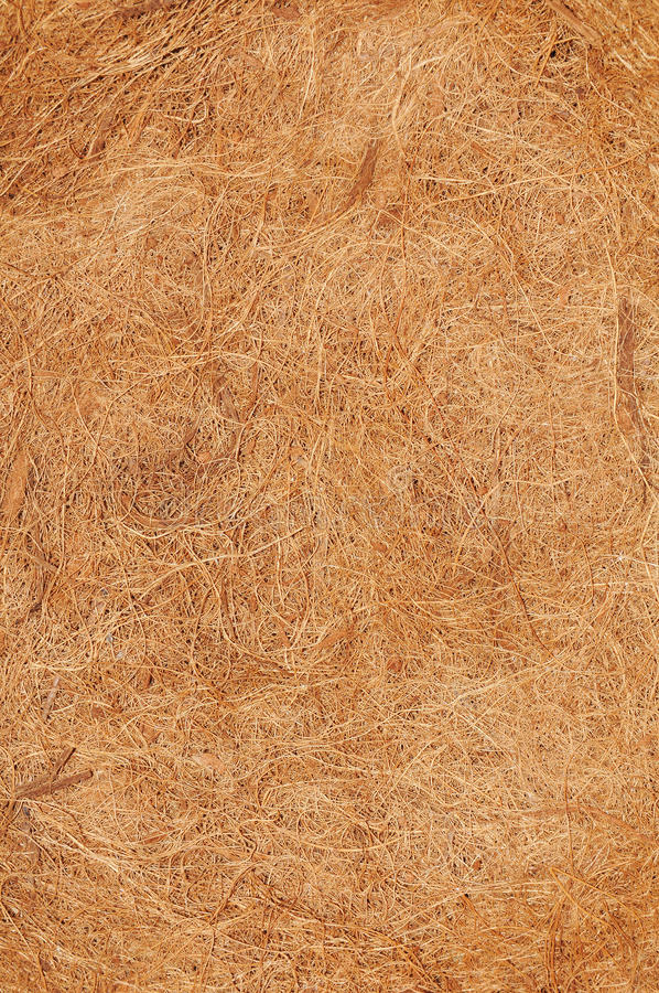 Download Coconut texture stock photo. Image of detailed, detail - 20045700