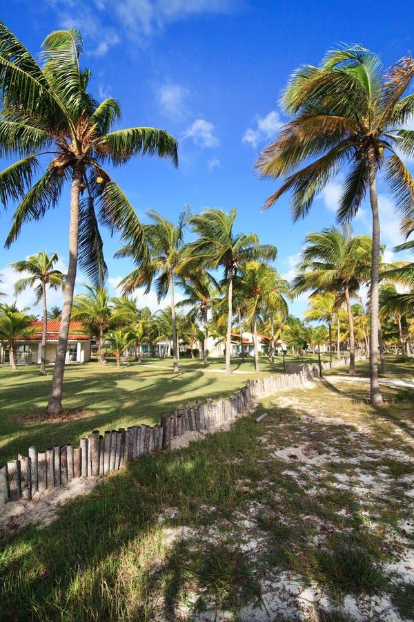 Free Coconut Tree. Stock Photography - 25524872