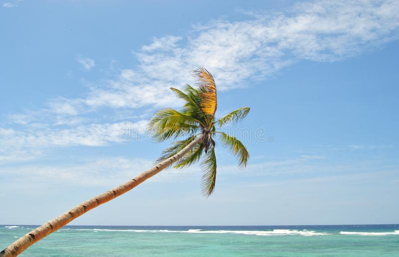 Tropical Beach and The Coconut Tree royalty free stock photography