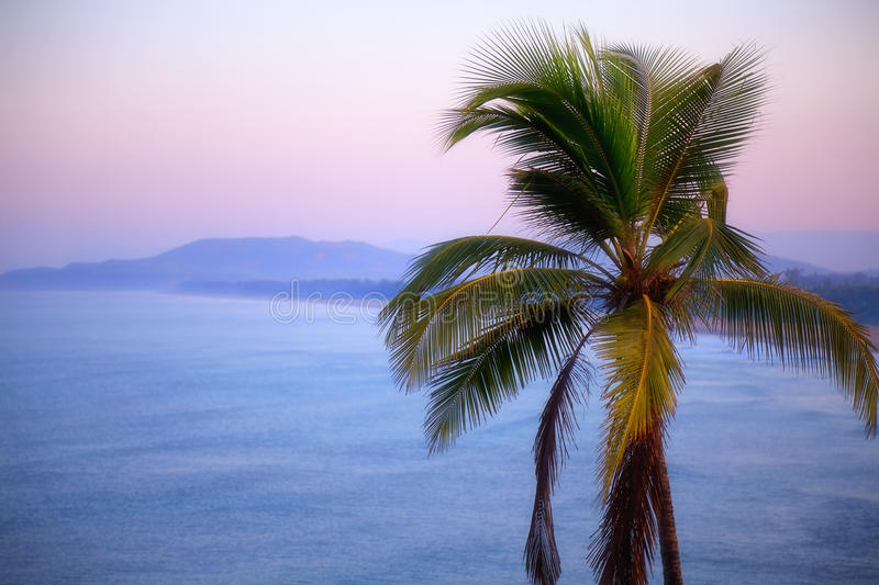 Download Coconut Tree On Background Of Sea And Mountains Stock Photo - Image: 39497722