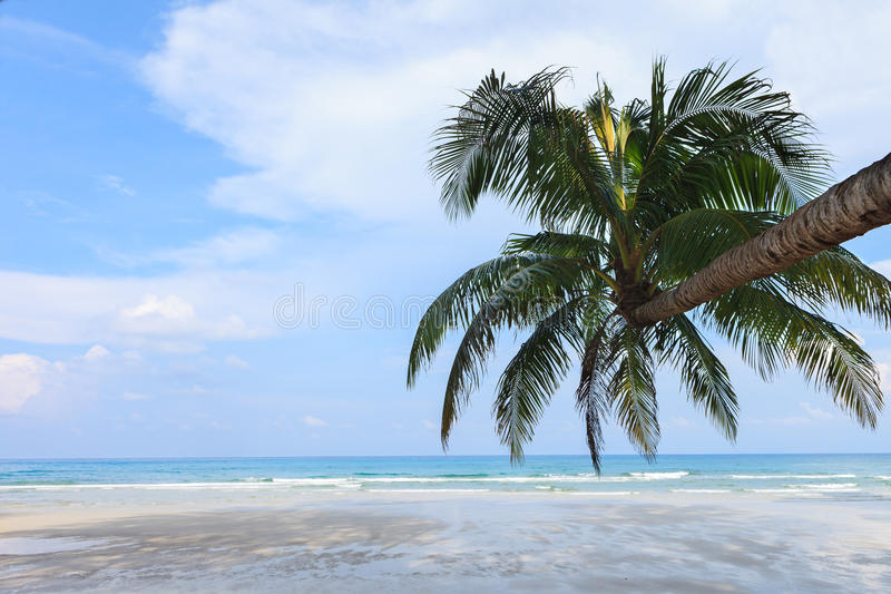 Download Coconut Tree on the beach stock photo. Image of kood - 25750714