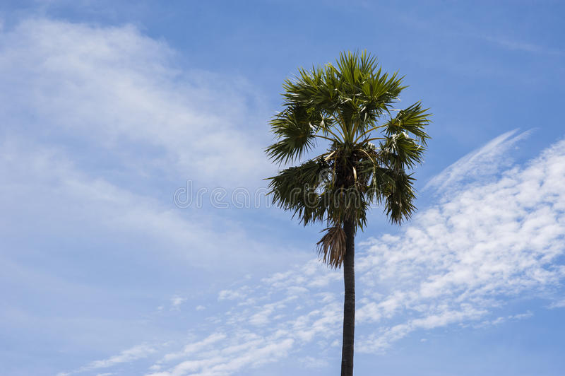 Coconut tree with clouds blue sky stock photos