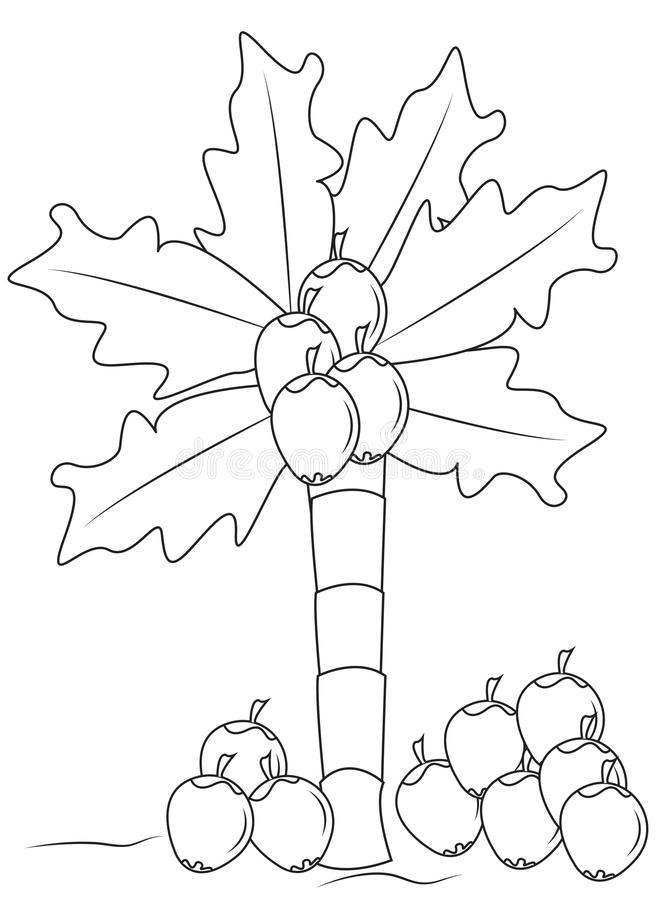 Coconut tree coloring page stock illustration. Image of colored ...