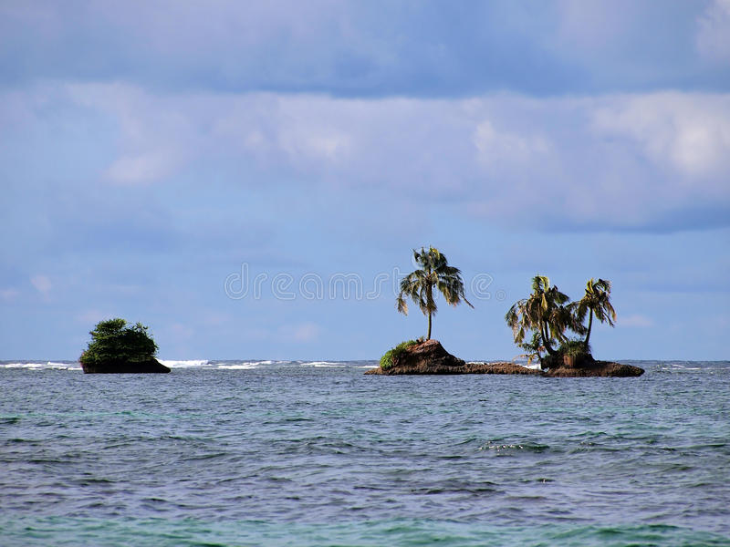 Download Coconut tree island stock image. Image of rica, central - 20911103