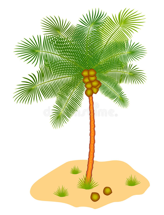 Coconut tree. With nuts and plants stock illustration