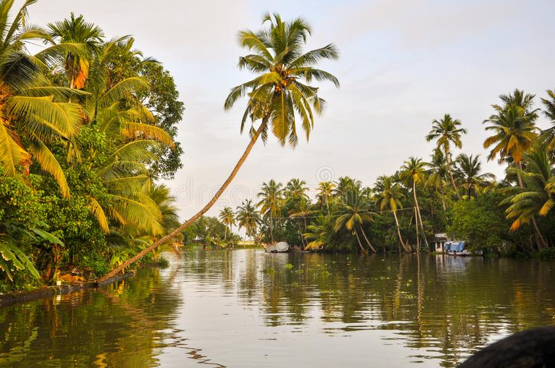 Coconut tree over Kerala Back water..Alleppey..Clicked from house boat. Coconut tree over kerala  water..alleppey..clicked from house boat. Backwaters royalty free stock photo