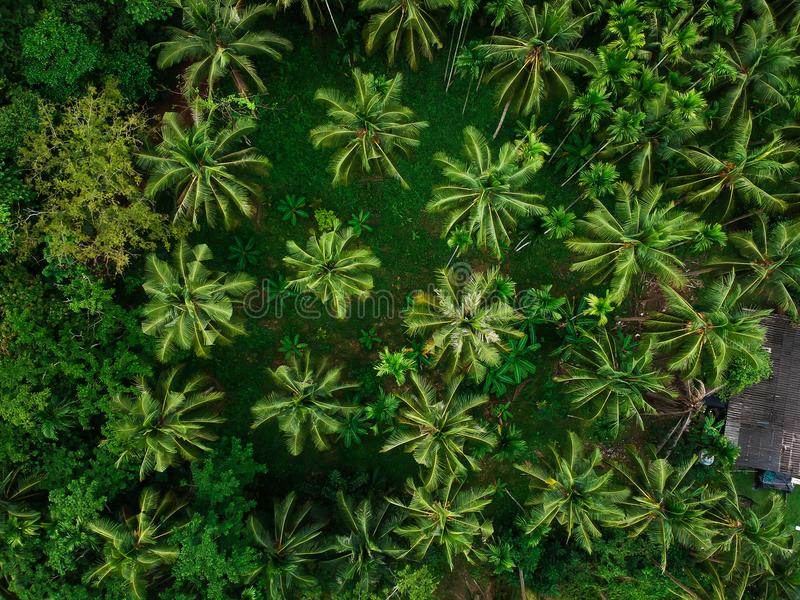 Coconut tree park top view green background. Palm tree stock images
