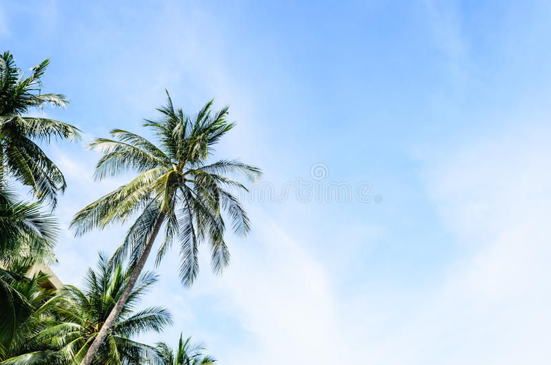 Download Coconut Tree stock image. Image of beach, coconut, leans - 32410521