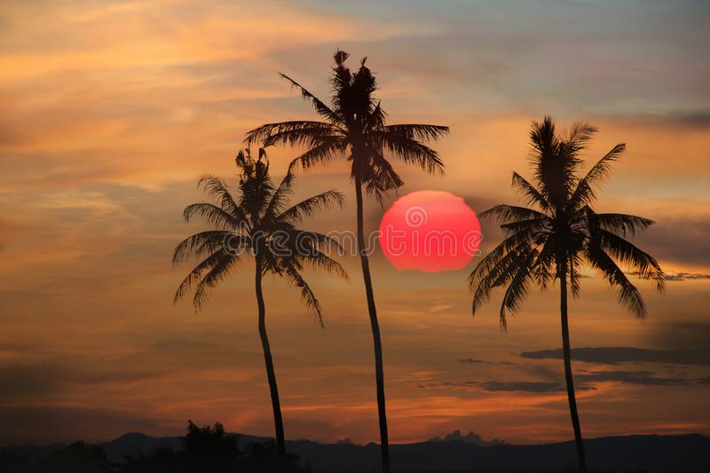 Coconut tree during sunset. Silhouetted of coconut tree during sunset asia background beach beautiful blue caribbean coast dusk evening exotic hawaii high stock photography