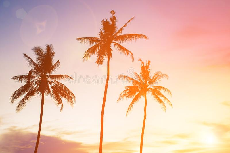 Coconut tree during sunset. Silhouetted of coconut tree during sunset asia background beach beautiful blue caribbean coast dusk evening exotic hawaii high royalty free stock photo