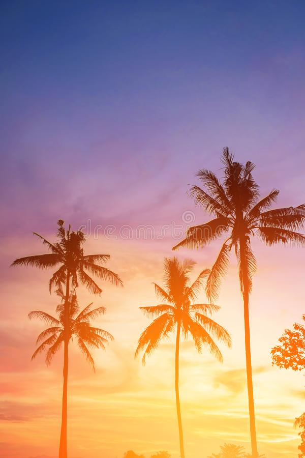 Coconut tree during sunset. Silhouetted of coconut tree during sunset asia background beach beautiful blue caribbean coast dusk evening exotic hawaii high royalty free stock photos