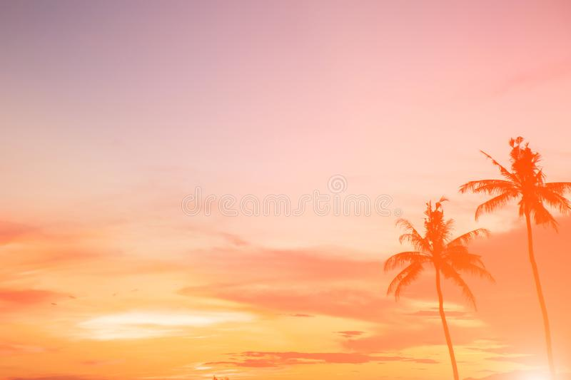 Coconut tree during sunset. Silhouetted of coconut tree during sunset asia background beach beautiful blue caribbean coast dusk evening exotic hawaii high royalty free stock photography