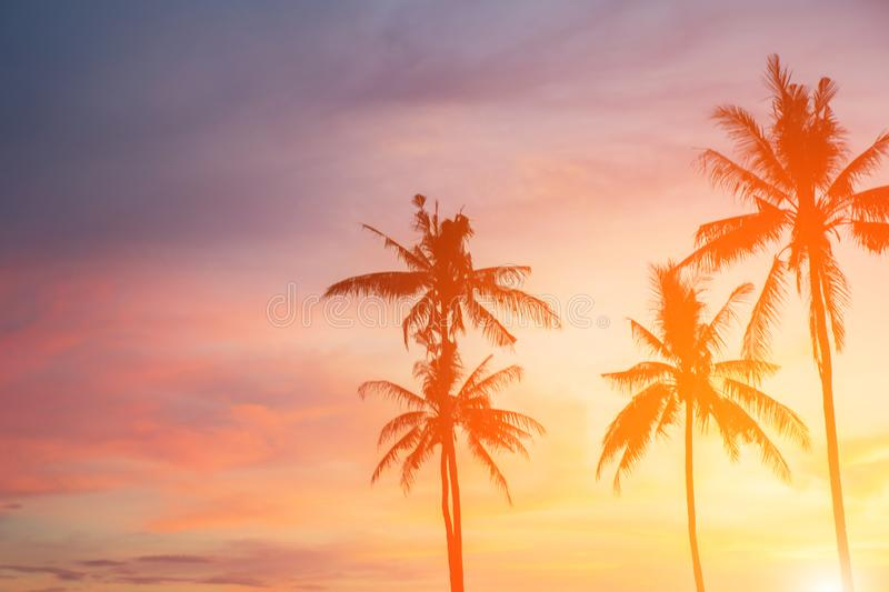 Coconut tree during sunset. Silhouetted of coconut tree during sunset asia background beach beautiful blue caribbean coast dusk evening exotic hawaii high royalty free stock images