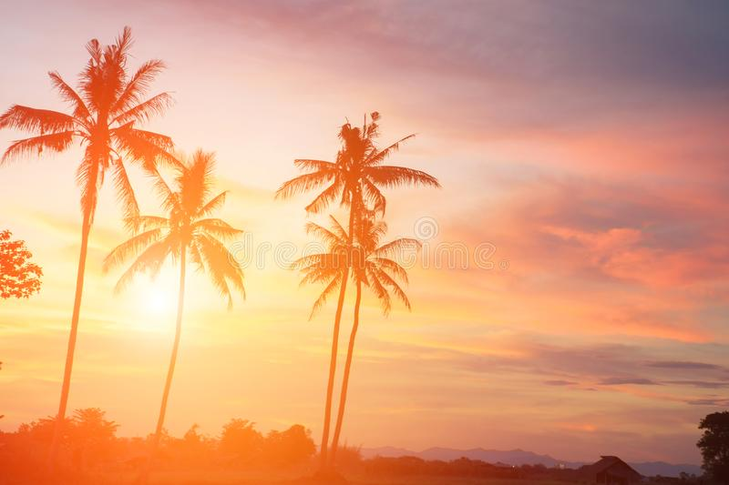 Coconut tree during sunset. Silhouetted of coconut tree during sunset asia background beach beautiful blue caribbean coast dusk evening exotic hawaii high royalty free stock image