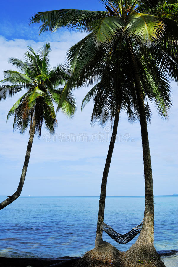 Coconut tree under blue sky royalty free stock photography
