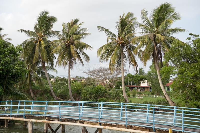 Coconut tree in the village stock photos