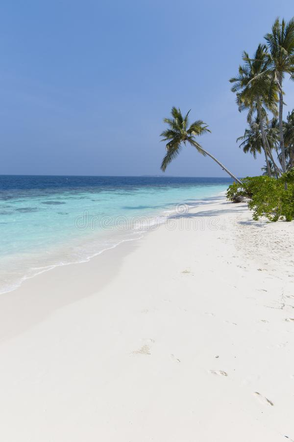 Coconut tree on a white sandy beach and crystal clear water in the Maldives stock photos