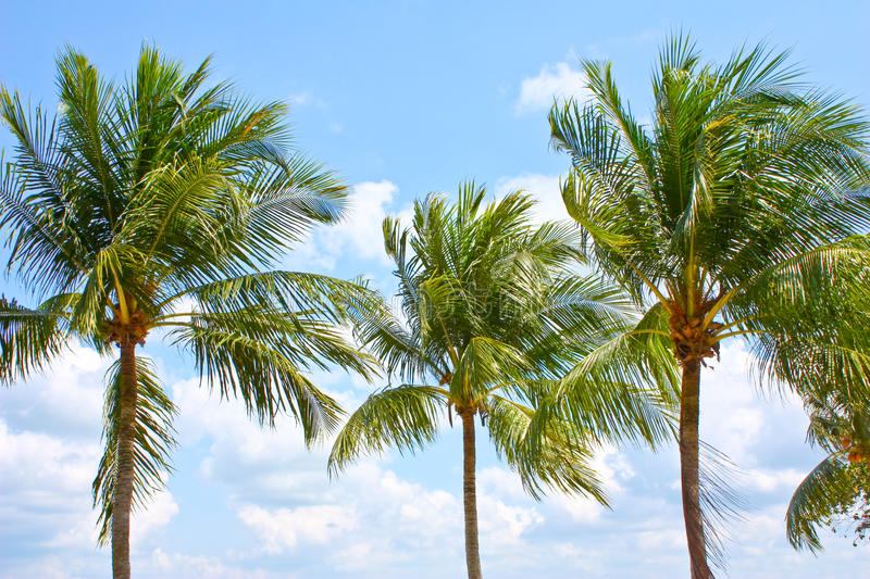 Download Coconut trees stock photo. Image of detail, mystery, artistic - 12984830