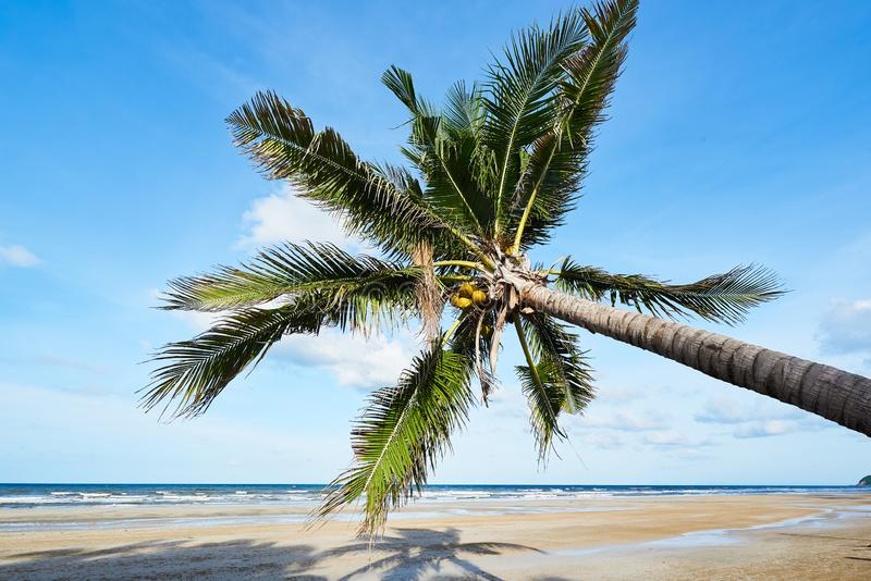 Coconut trees on the beach against blue sky and clouds background stock image