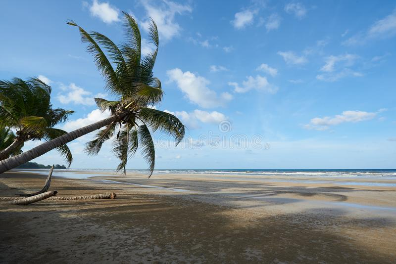 Coconut trees on the beach against blue sky and clouds background stock photos