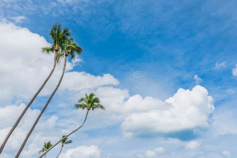 Coconut trees & beautiful blue sky on tropical beach. Coconut trees & beautiful blue sky royalty free stock photo